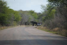 kruger nationalpark South africa