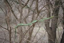kruger nationalpark South africa snake
