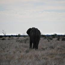 kruger nationalpark South africa elephant