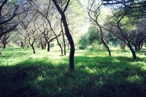 Casela Nature & Leisure Park