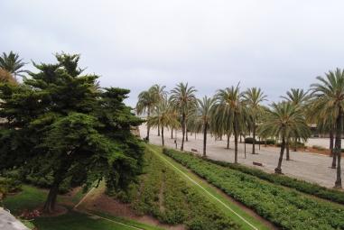Palma Cathedrale (1)